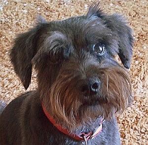 Sophie 2010-08-26 16.19.41