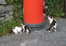 20090726 Ireland - Inismor cats