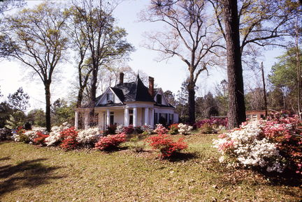 Royal Rd house with azaleas