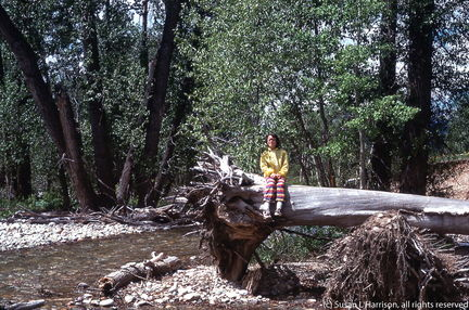 1975 Grand Tetons - Susan on a tree