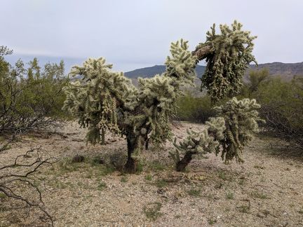 023-Saguaro National Park East-20190321 Saguaro NP (34)