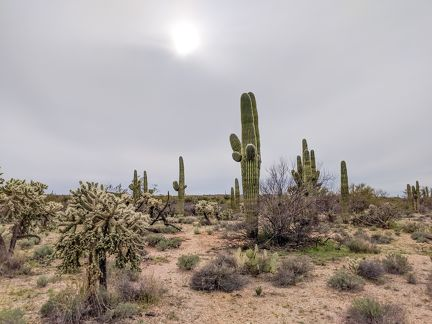 031-Saguaro National Park East-20190321 Saguaro NP (25)