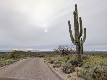 040-Saguaro National Park East-20190321 Saguaro NP (1)