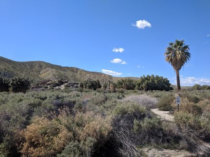 011-Coachella Nature Preserve-20190312 Coachella (73)