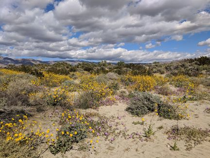 020-Coachella Nature Preserve-20190312 Coachella (58)