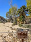 002-Joshua Tree National Park,-20190313 Joshua Tree NP Cottonwood spring contaminated (2)