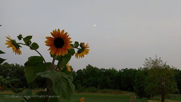 Moon Flower 6-30-2012 8-45-09 PM